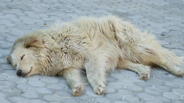 Магазин ИКЕА в Италии открывает двери для бездомных собак