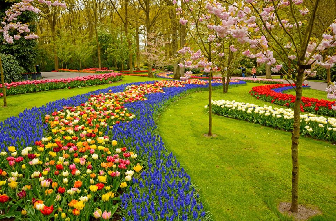 Как создать свой цветочный сад за 3 шага